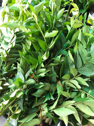 咖喱叶 Curry Leaves