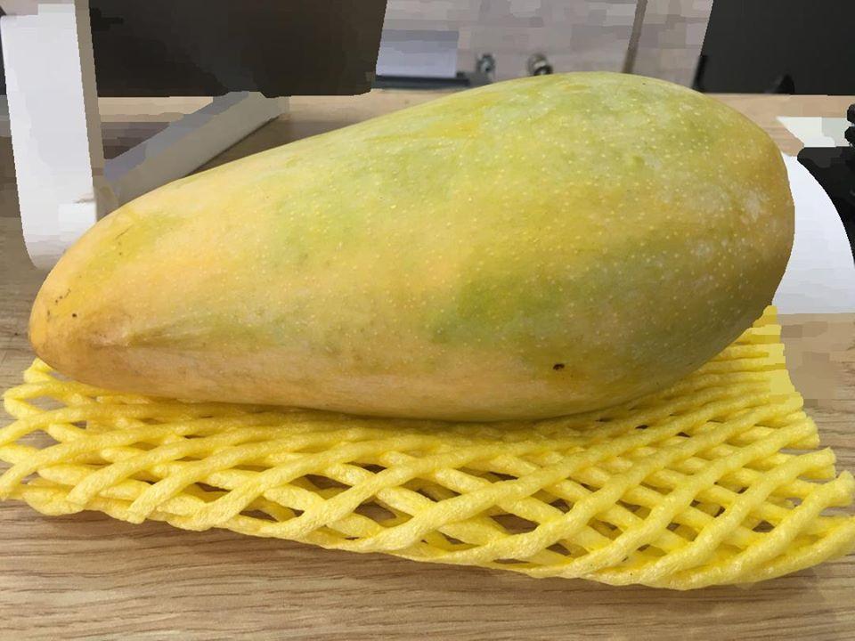 金龙甜芒果