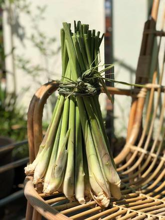 香茅 Lemongrass