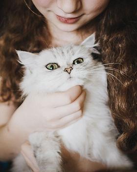 Accarezzare un gatto bianco