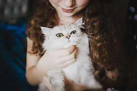 Acariciar a un gato blanco