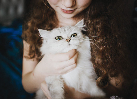 petting-a-white-cat