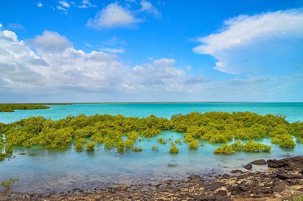 Mangrove Delight.jpg