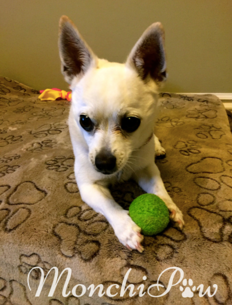 Monchi's favorite toy :)