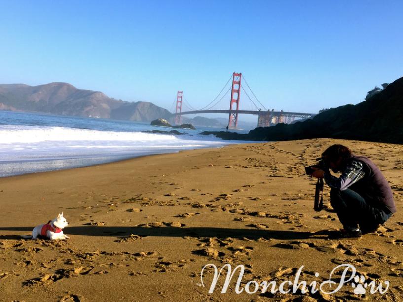 Monchi loving the camera at Baker Beach, San Francisco