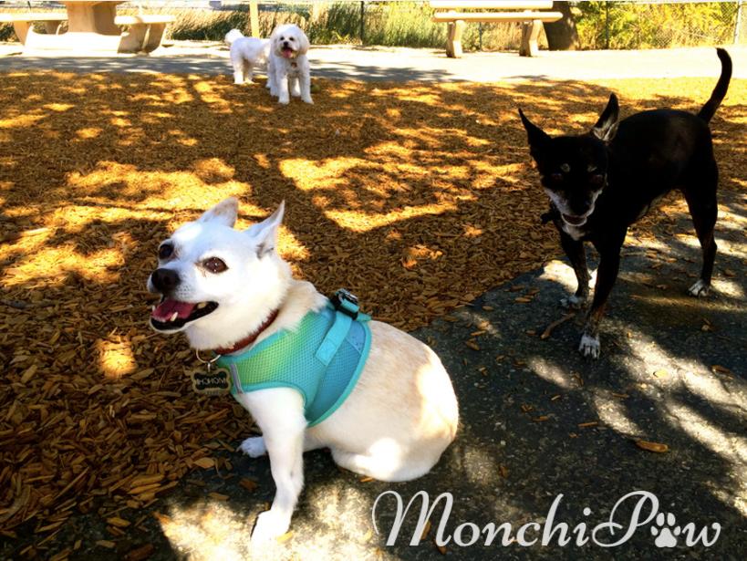 Monchi & furriends