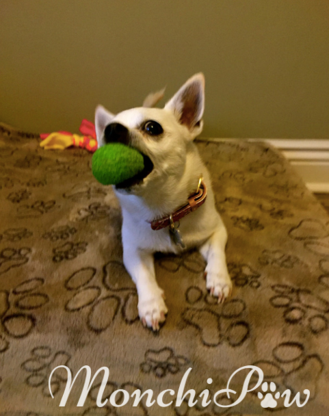 Monchi is ready to play fetch!