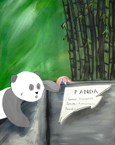 Where do panda's live?