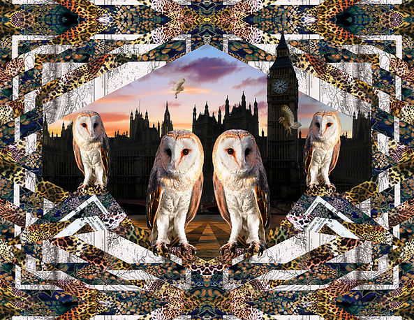 Barn owl2 westminster Layout - full size