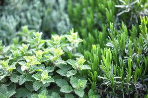 Herb%20Plants_edited.jpg
