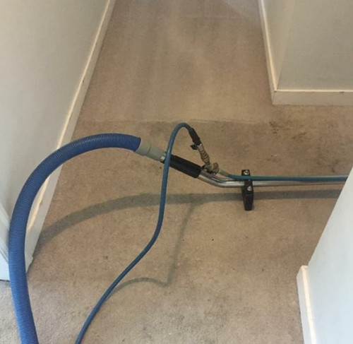Carpet cleaning auckland.jpg