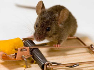 Why DIY Mouse Control Is Seldom Successful