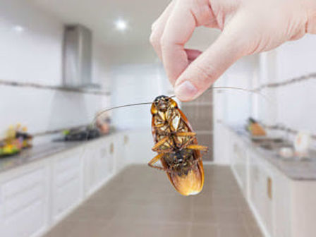 Pest Control Services in Auckland