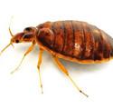 bedbug_control.jpg