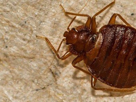 Why DIY bed bug control is a waste of money
