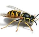 wasp_control.jpg