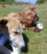 dogs eating icecream