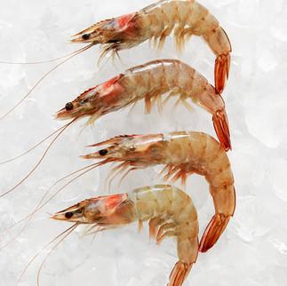 Shrimp, 2017