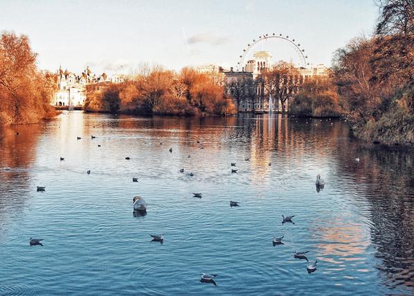 London St. James' Park, 2012