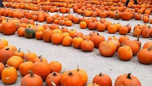 Attractions- LindnerPumpkin.jpg