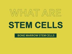 What Are Bone Marrow Stem Cells?
