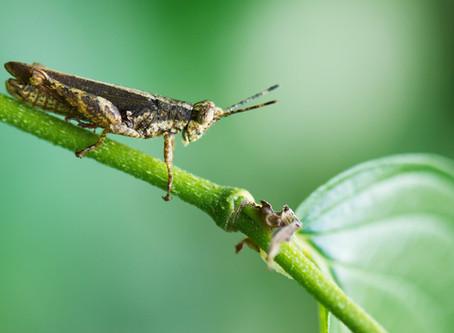 O pequeno superlativo dos insetos
