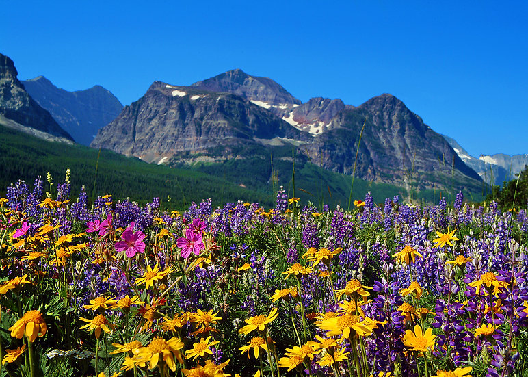 Wildflowers in the Summer