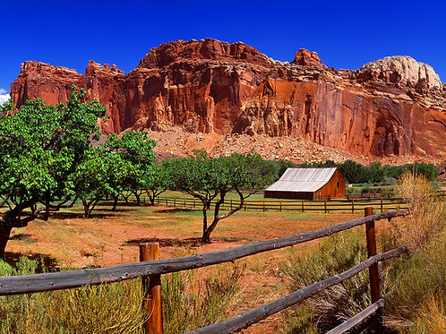 Orchards, Capitol Reef NP