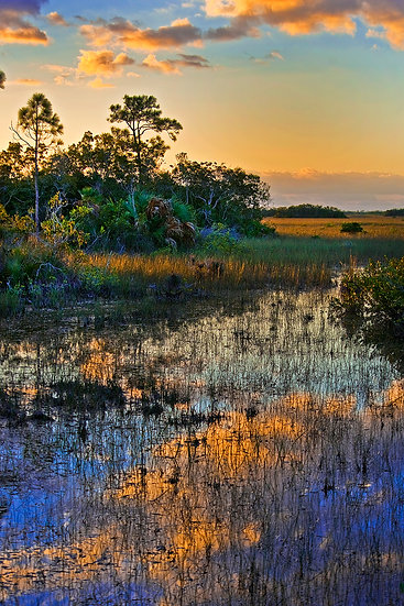 Sunrise in the Glades
