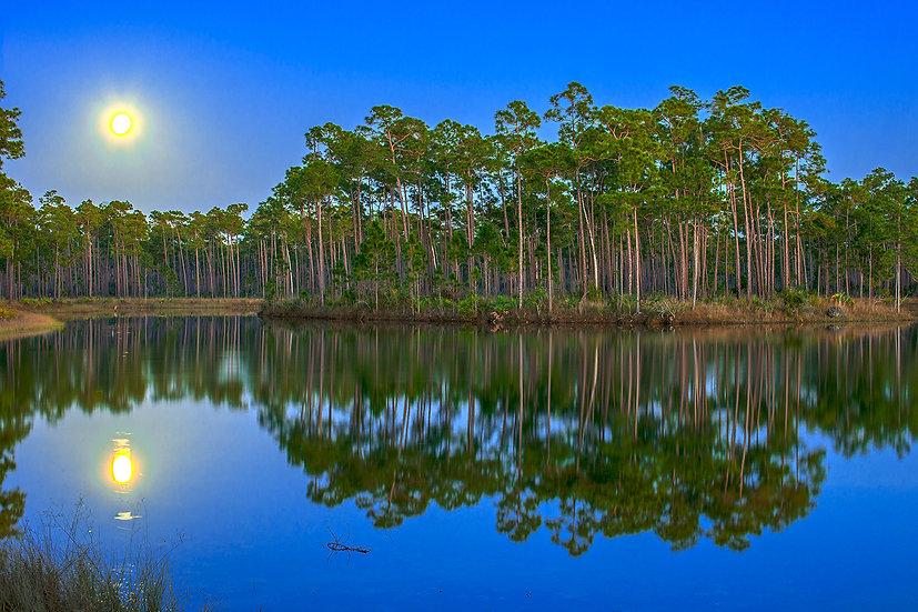 Moonrise Over Everglades National Park