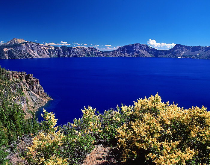 Wildflowers Along the Scenic Drive, Crater Lake NP