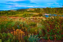 Wildflowers in Grand Teton National Park