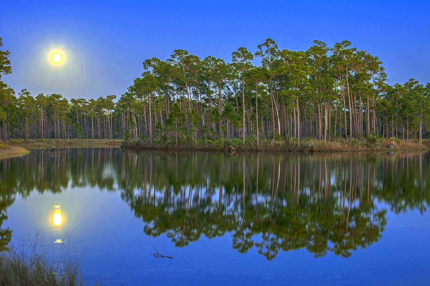 Moonrise Over Everglades National Park