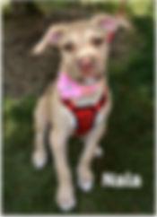 Lily 8-10-19  now Nala.jpg