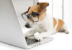 dog laptop (2).jpg