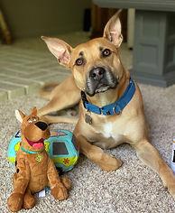 Burrito now Scooby Update 5-2020.jpg