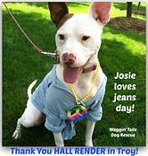 Josie thank you Hall Render Jeans Day Do