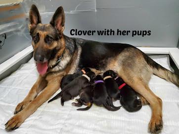 Clover feeding pups 4-24-2020 name.jpg