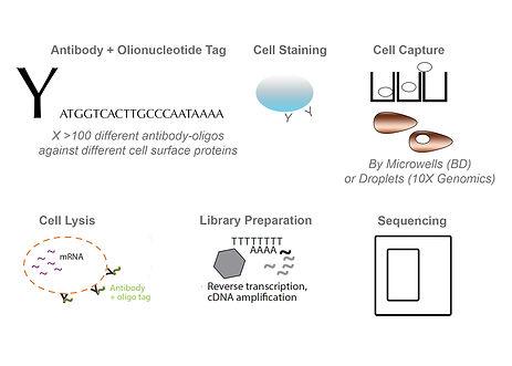 poster molecular cytometry.jpg