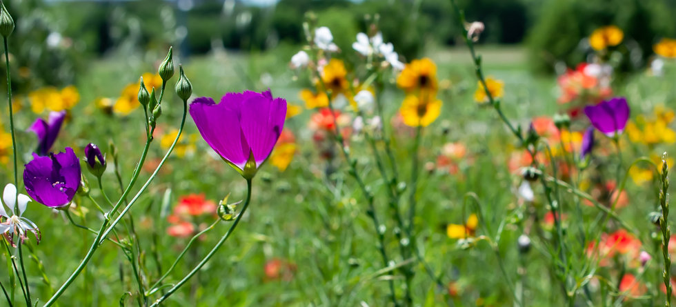Wildflowers Pan