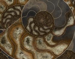Ammonite-Right