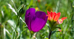 Wildflowers Upclose