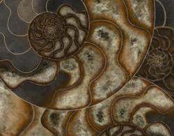 Ammonite-Left