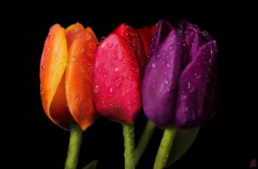 Lori_Losasso_Dewy Tulips.jpg