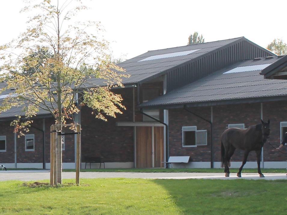 horse breeding broechem