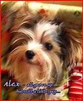PPP -  Alex _ 20 months.jpg