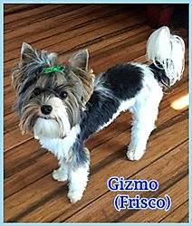 9-29 Frisco (Gizmo) _ 1 year.JPG