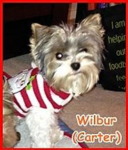 PPP 12-13 Wilbur (Carter).jpg