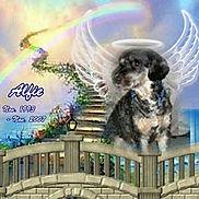 Rainbow Bridge - ALFIE.jpg