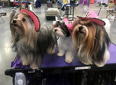 10-31-2020 Pixie, Dolly, & Gem as cowgir